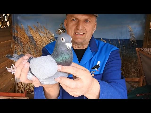 Gołębie dla Mikołaja na urodziny od taty tel. 728 465 939