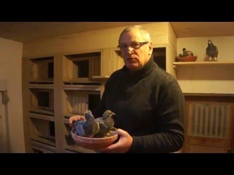 Andrzej Walendziak - młode 2016 na sprzedaż - prezentacja - 26.03.2016r