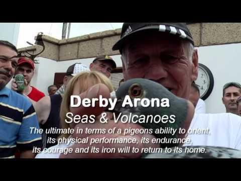Pigeons Arriving Part-1 Arona-TENERIFE Final Race 2012 24th Mar 2012