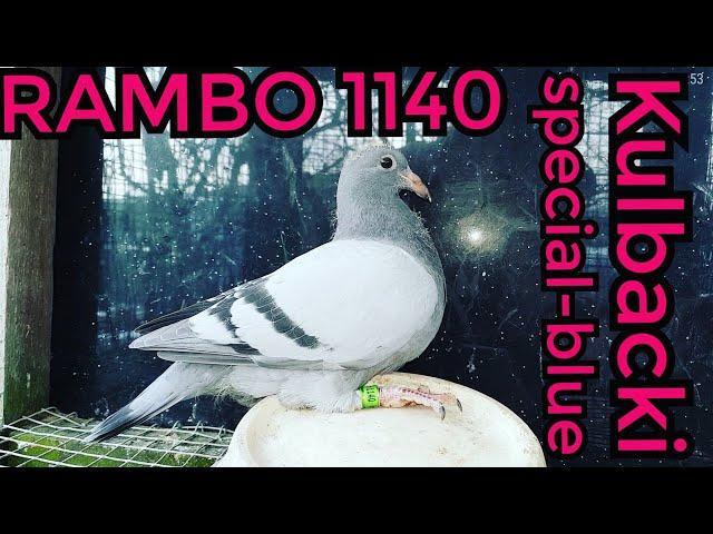1140 RAMBO na sprzedaz for sale zum Verkauf tel +49 1511 290 1511