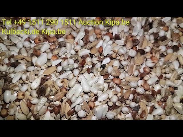 Samenmischung top quality SUPER PIGEONS FOOD BIRD FOOD TAUBENFUTTER KARMA DLA GOLEBI DLA PTAKOW