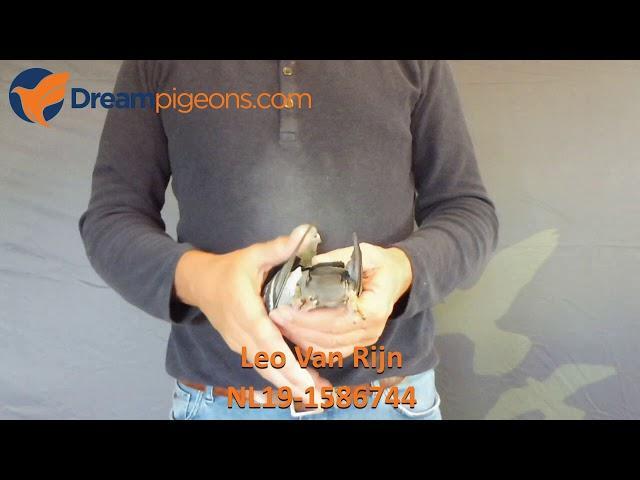 NL19-1586744 - Leo Van Rijn Dreampigeon Auction Video