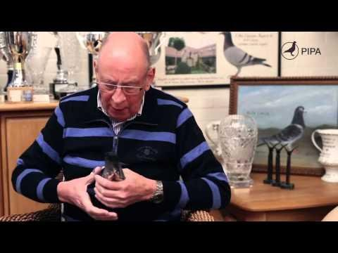 Hans Eijerkamp testifies to the input of the Heremans pigeons in his strain