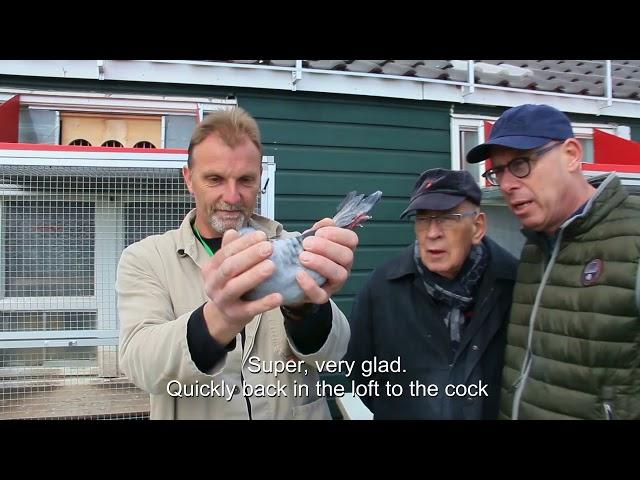 Vlog #24 Presenting first pigeon from Tienen 13 4 2019