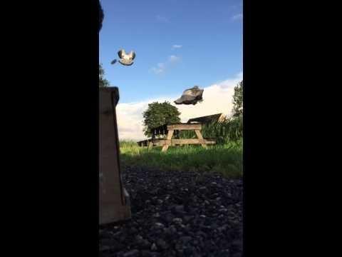 Jonge duiven opleren bij boerakker