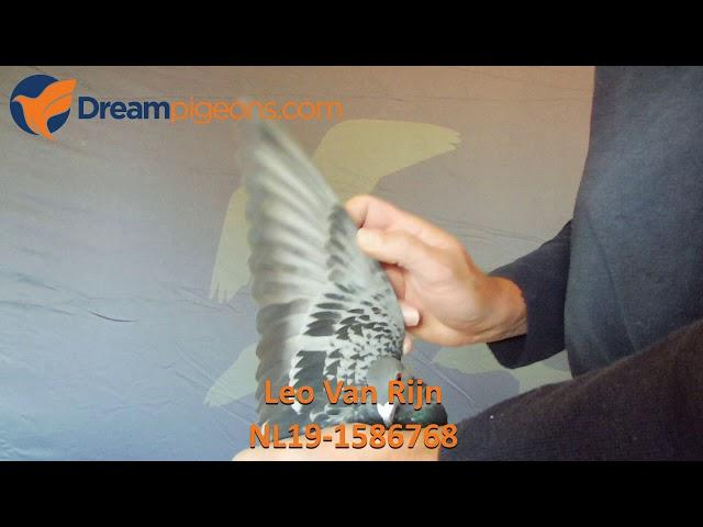 NL19-1586768 - Leo Van Rijn Dreampigeons Auction Video