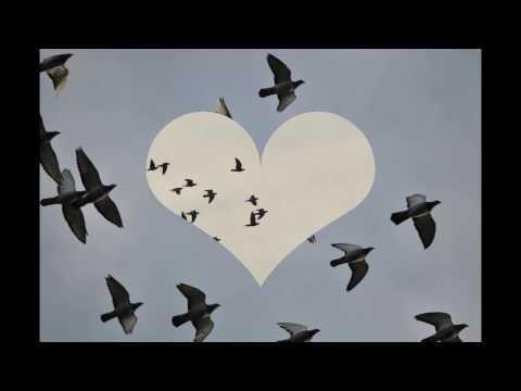 Gołębie w niebie , muzyka relaksacyjna ...1.