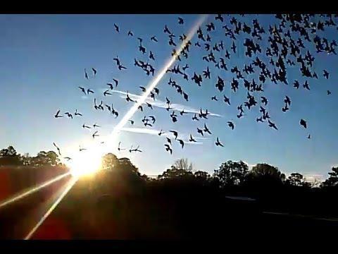 Suelta de palomas 280 millas BALDWIN FLORIDA - Southwest Florida Pigeon Racing Combine