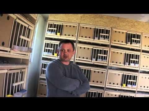 Mariusz Dmitruk - nowe gołębniki, gołębie, itp. - część 01 - 15.04.2016r