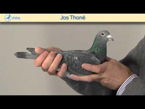 PIPA - Jos Thoné Auction - Guru