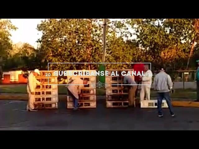 Suelta De Camaguey en Candelaria 550km,llegadas de las palomas de esnel