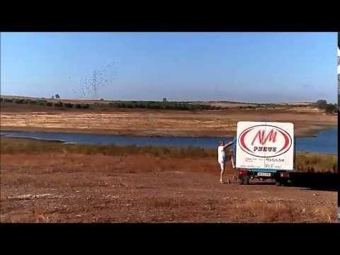5º Treino Algarve Great Derby - Pereiro 50 Km