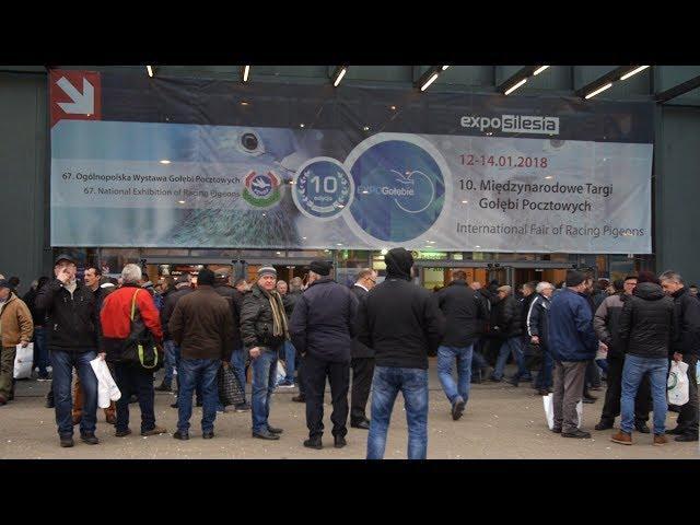 EXPOGołębie/EXPOPigeons 2018 - W 3 minuty wokół targów. International Pigeon Fair