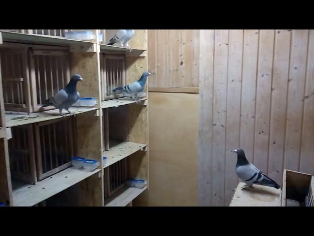 Im Taubenschlag Video 1.