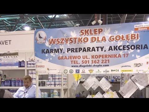 ExpoGołębie w ExpoSilesia 2019 (sobota)