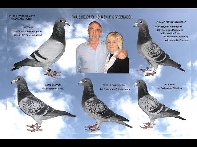 Video 376: Paul & Helen Johnson & Chris Greenwood of Hull: Premier Pigeon Racers