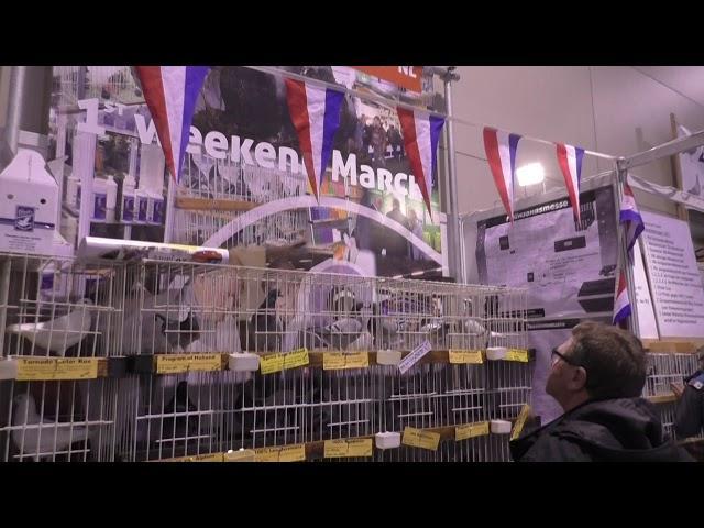 Racing pigeons EXPO SILESIA - Wystawa Ogólnopolska Gołębi Pocztowych 2018r