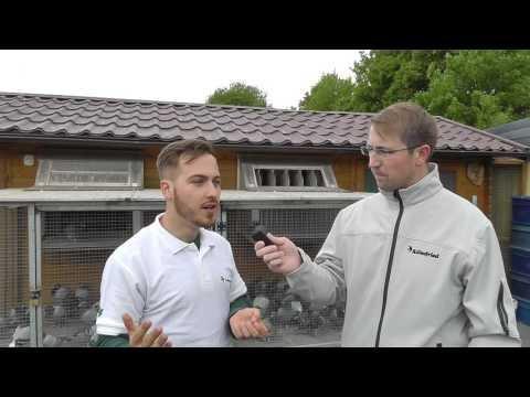 3. Preisflug 2016 Roland & Denis Faber (Brieftauben)