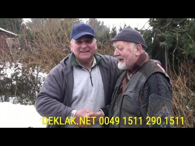 Tarnowskie Góry, Śląsk/Schlesien ,0049-1511-290-1511 KULBACKI, 1.NAJLEPSZA ROCZNA SAMICA W ODDZIALE