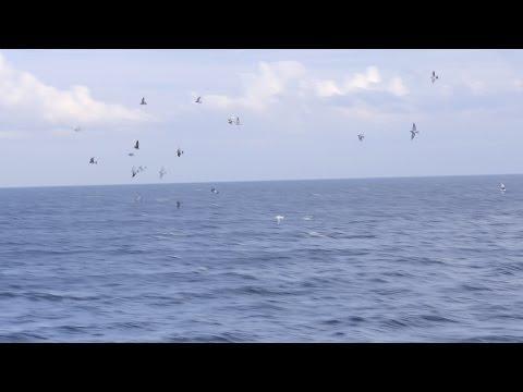 Finał WG Rejów 2016 - Lot z morza