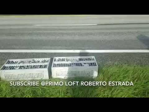 72 millas roberto loft catellano