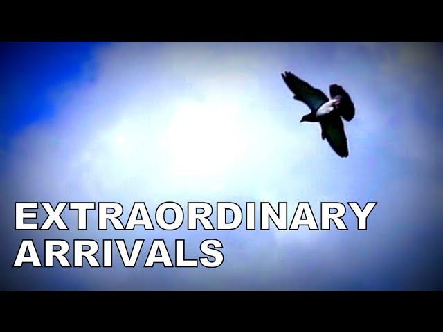 Vlog #90 EXTRAORDINARY Arrivals With Winner Against 6400 Pigeons #HansAndEvertJanEijerkamp