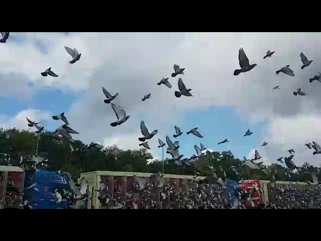 2017 05 20 Liberation Pigeons