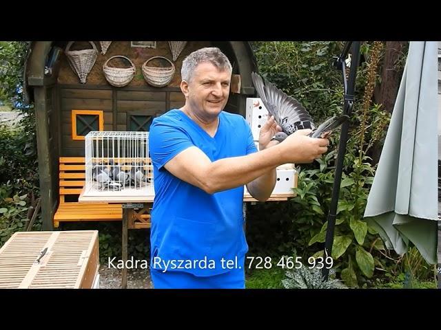 Mikołajki 550 km konfrontacja młodych gołębi Wyżymaczy i Żniwiarzy tel. 728 465 939