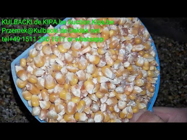2) swieza karma mikstura Kulbackiego to zdrowie frisches Futter und Mixturen das ist pure Gesundheit