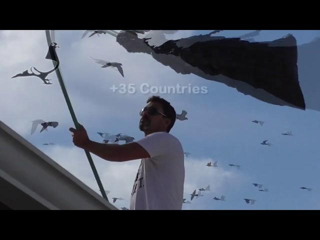 Pigeons Condition 30th November 2019