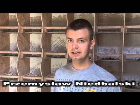 Przemysław Niedbalski - Gołębie młode