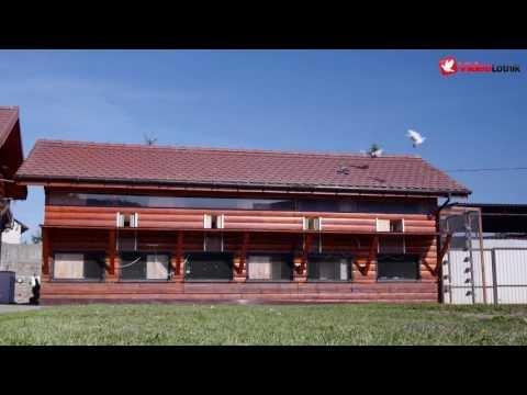 Zbigniew Knajp - PZHGP 0309 Szczecin - przylot gołębi z lotu