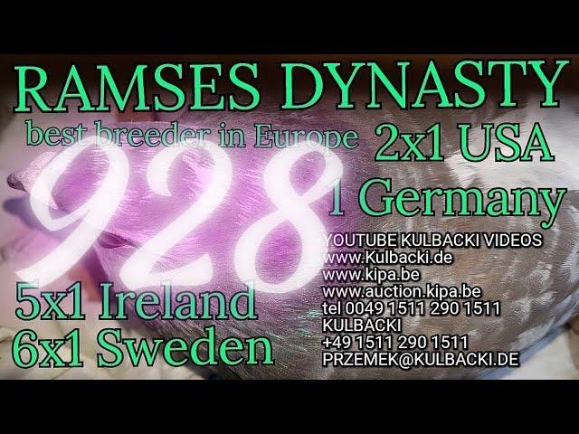 928,ojciec:Champion 41 x Stampara x matka: córka Ramsesa 14x1. (6x Sweden 5x Irland 2xUSA 1xGermany)