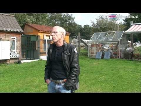 Duivenfilm Nico Meuwsen 2010