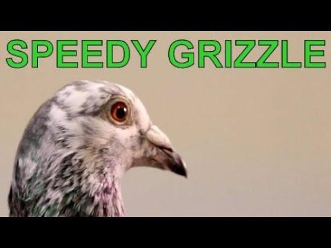 SUPER PIGEON Speedy Grizzle presented