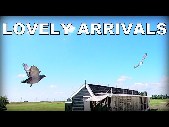 Vlog #93 LOVELY ARRIVALS From 373km
