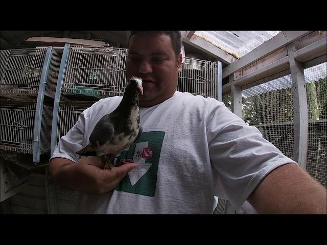 YOUNG BIRDS PIGEON RACING 2020 + NEW LOFT