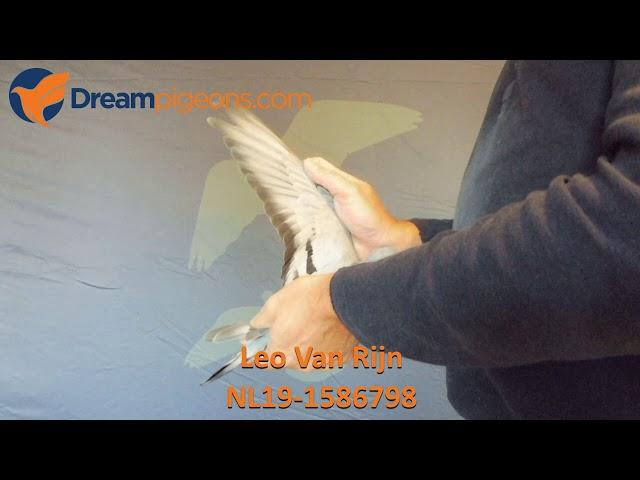 NL19-1586798 Leo Van Rijn Dreampigeons Auction Video
