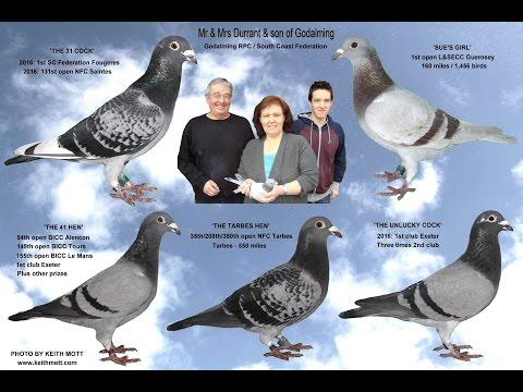 Video 341: Mr. & Mrs. Durrant & son of Godalming: Premier Pigeon Racers