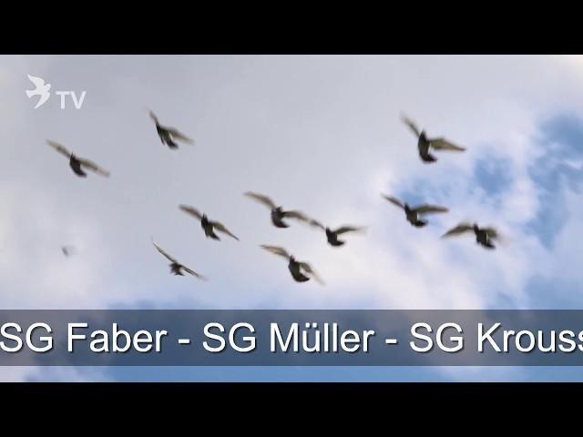 DVD Bundle - Die Macher – jetzt vorbestellen und gewinnen (Short Version)