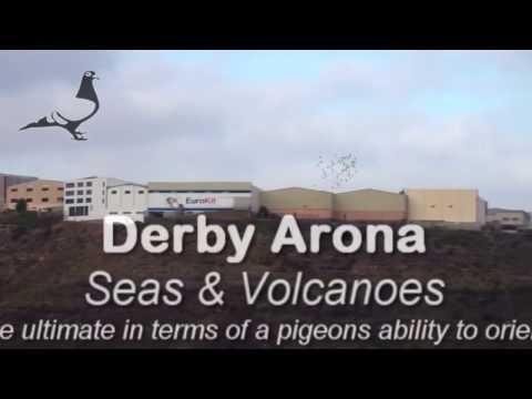 Arona-TENERIFE Pigeon Race 2012 - Car Race HOTSPOT-2 5th Mar 2012