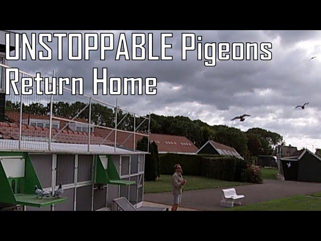 Vlog #69 UNSTOPPABLE Pigeons Return Home With High Speed
