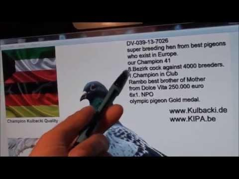 the second KUWAIT auction from Kulbacki racing pigeons super bloodline Stampair Dolce Vita 41