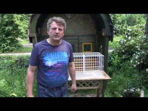 Tajemnice lotowania gołębiami - wtorek wdowców ...