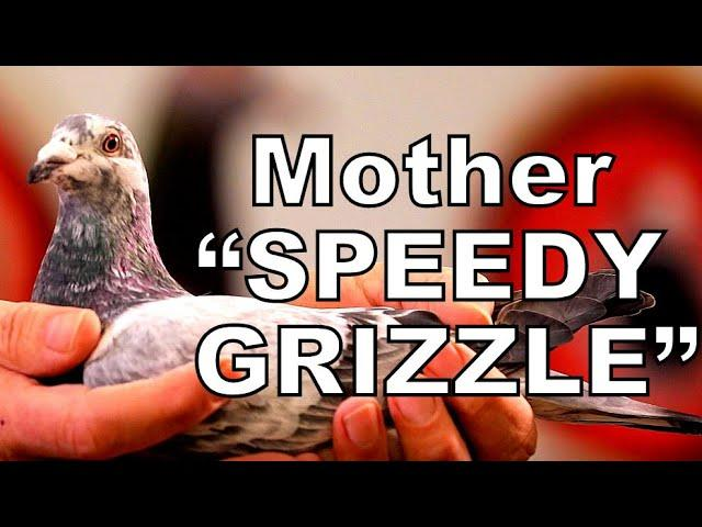 Mother SPEEDY GRIZZLE    Daughter Goed Grijs