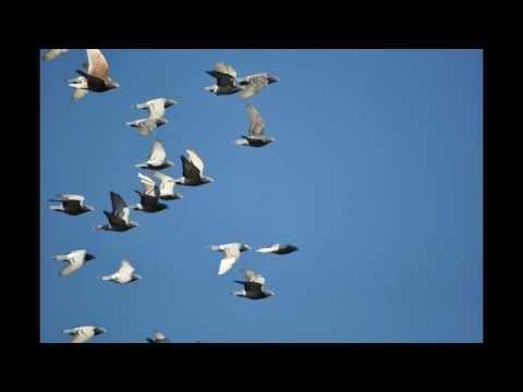 Gołębie w niebie , muzyka relaksacyjna ...8.