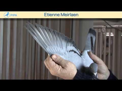 PIPA - Etienne Meirlaen Auction - De Jelena
