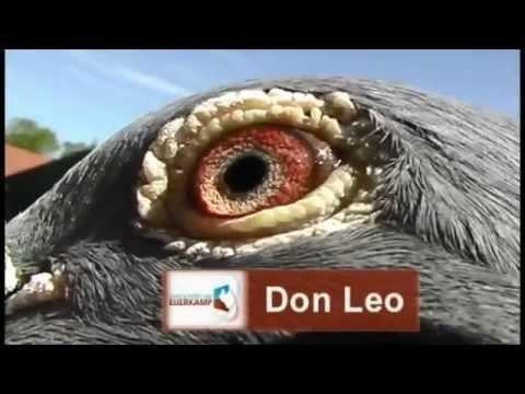 Evert Jan met Don Leo een Eijerkamp- van Loon vaandeldrager