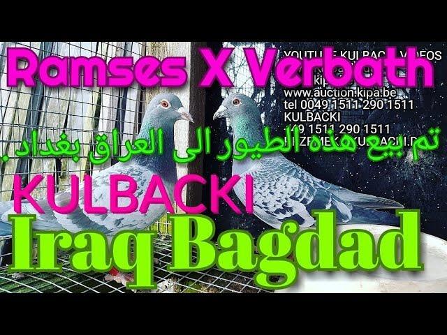 تم بيع هذه الطيور الى العراق بغداد ..RESERVATION #IRAQ BAGDAD, ZAREZERWOWANE DO IRAKU,kutaiba alrawi