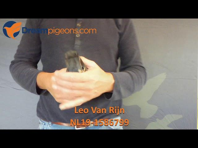 NL19-1586799 Leo Van Rijn Dreampigeons Auction Video